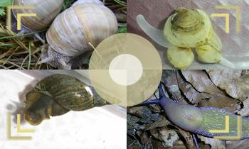 Моллюски в объективе